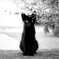 """Zsidó macska. A holokauszt egy """"kívülálló"""" szemével"""