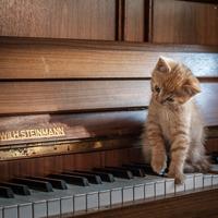 Zongorázni lehet a különbséget ...