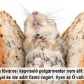 Kőbányai szál a patkányügyben: a polgármester szótlanul hagyta, hogy kisemmizzék az idevalósi jólműködő céget