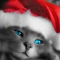 Boldog Karácsonyt és Kellemes Ünnepeket!