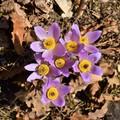 Tavaszváró kéktúrázás a Vértesben - Csókakőtől Gántig