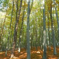 Túra a (K)ősz(eg)i-hegységben - Írottkő 70