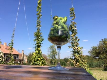 Komlószüret - Wet Hopped Ale