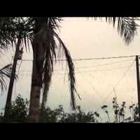 Pókok szőttek be egy várost Brazíliában