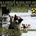Állatok mentése Szigethalom környékén