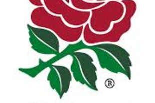 win or lose, wear the rose