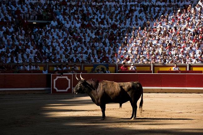 toro-herido-plaza-toros-sanfermines-tauromaquia.jpg
