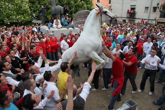 fiesta-caballos-del-vino-3.jpg