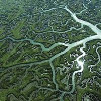 Doñana Nemzeti Park, Európa legnagyobb lápvidéke
