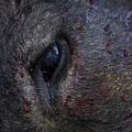 A bikákat megölik, ugye? (18+)