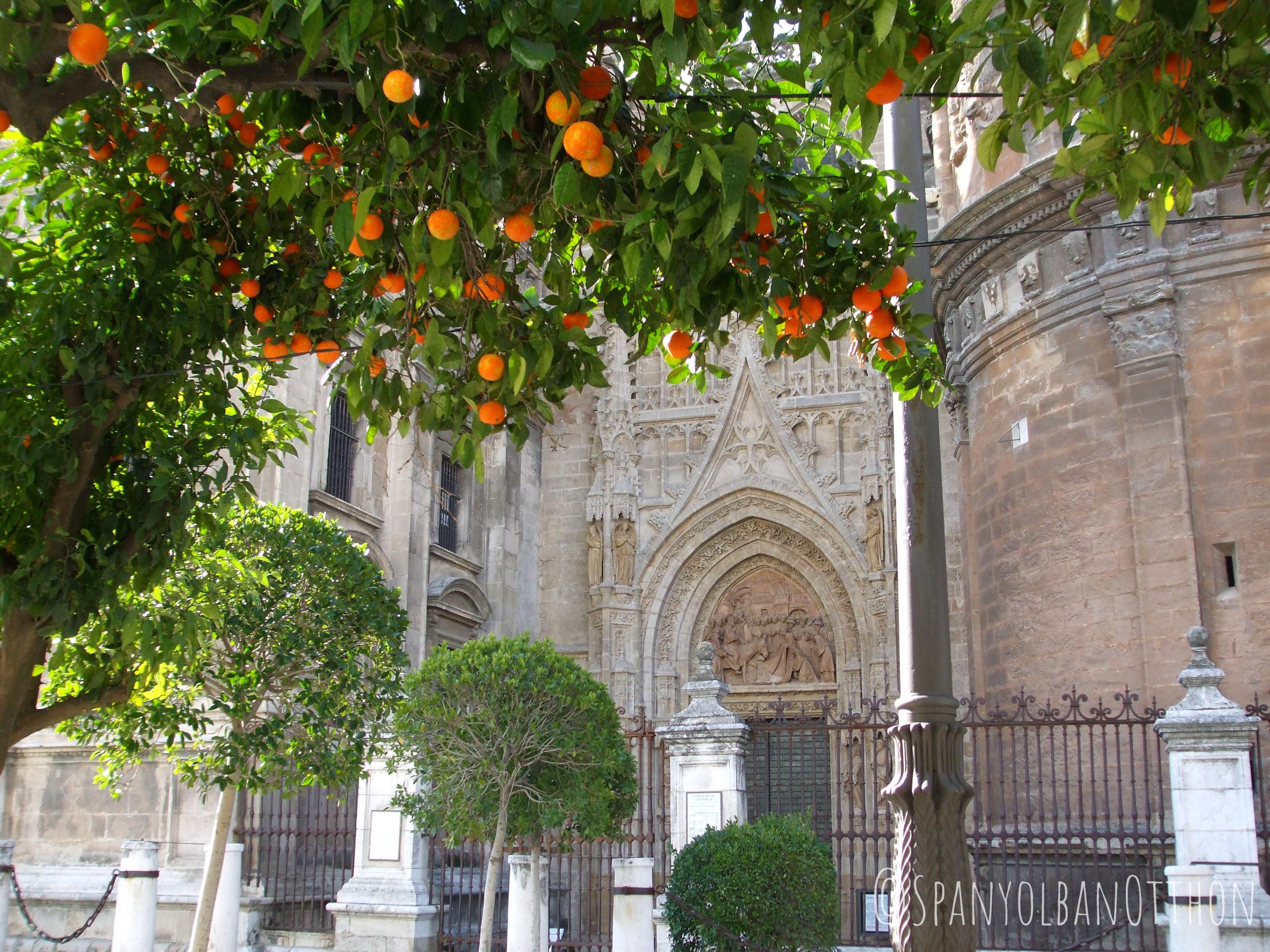 sevilla_latnivalok_spanyolban_otthon_44.jpg