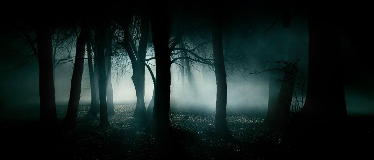 dark_forest_wallpaper-1280x960.JPG
