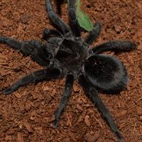 Véleményem a pókok kolonizálásról