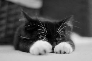 macsk