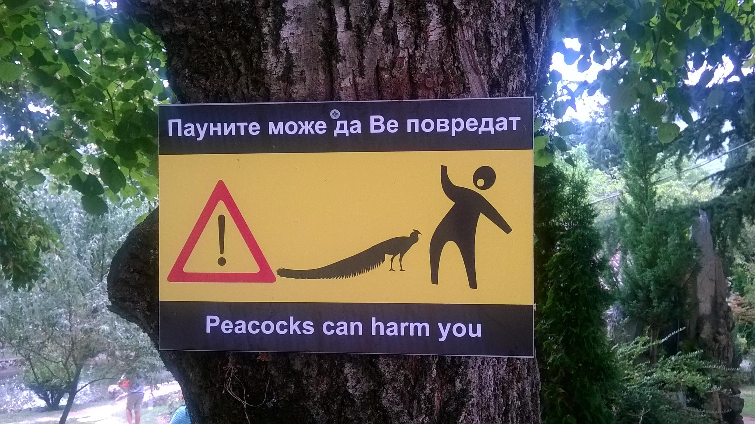 :D Erre nincsenek szavak. 'Vigyázat a pávák bánthatják Önt és gyermekét'