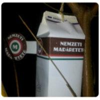 Nyiss Te is Nemzeti Madáretetőt! +kép +nyomtatható sablon