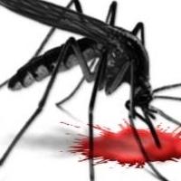 Ne hagyd, hogy a véredet szívják, avagy így űzd ki a szúnyogokat a lakásból!