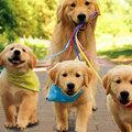 Ha szívesen keresnél pénzt kutyasétáltatással, erről mindenképp tudnod kell!
