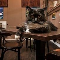 Zoo-Cafe, az állati jó hely - szó szerint! [kávézó-ajánló]