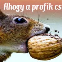 A diótörés 3 legegyszerűbb módja mókus módra