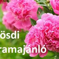 9+1 ingyenes budapesti program - most hétvégére!