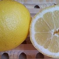 egy citrom kicsit sem szomorú élete