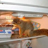 8 árulkodó jel, hogy le kell cserélned a hűtőd