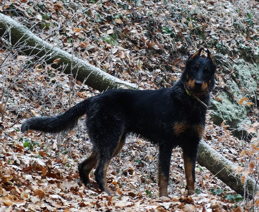 Kinti benti kutya télen