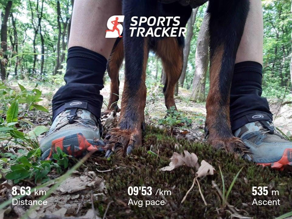 beauceron-hiking-running-trail.jpg