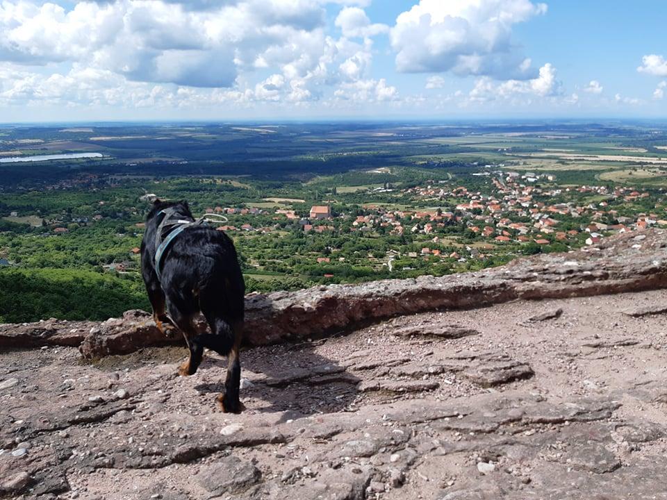 beauceron-hiking-running-trailu.jpg