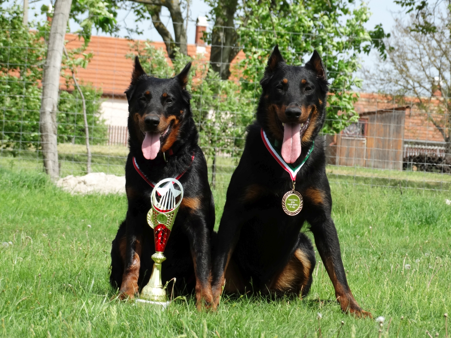 farm-trial-herding-beauceron.jpg