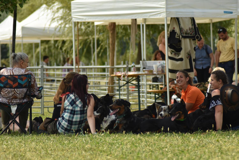 szaporca-tereloverseny-herding-trial-picnic.jpg