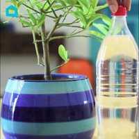 Így öntözd a szobanövényeket, ha elutazol otthonról