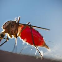 Anyád! A szúnyogok: 8 filléres tipp a vérszívók ellen