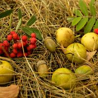 Mutatom, mi mindent gyűjthetünk ősszel a természet éléskamrájában