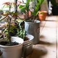 Vajon átvészelték a szobanövények a napmentes időszakot?