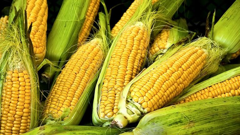 Így készítsd el a főtt kukoricát pillanatok alatt, a ...