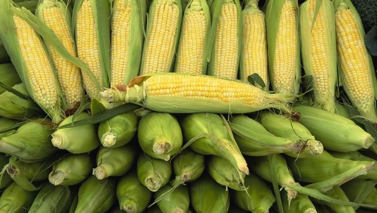 kukorica_pc.jpg