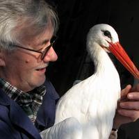 A hűséges gólya idén is visszaszállt párjához