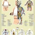 LEGO emberke anatómiája