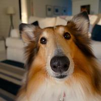 A te kutyádra ki vigyáz, ha elutazol?