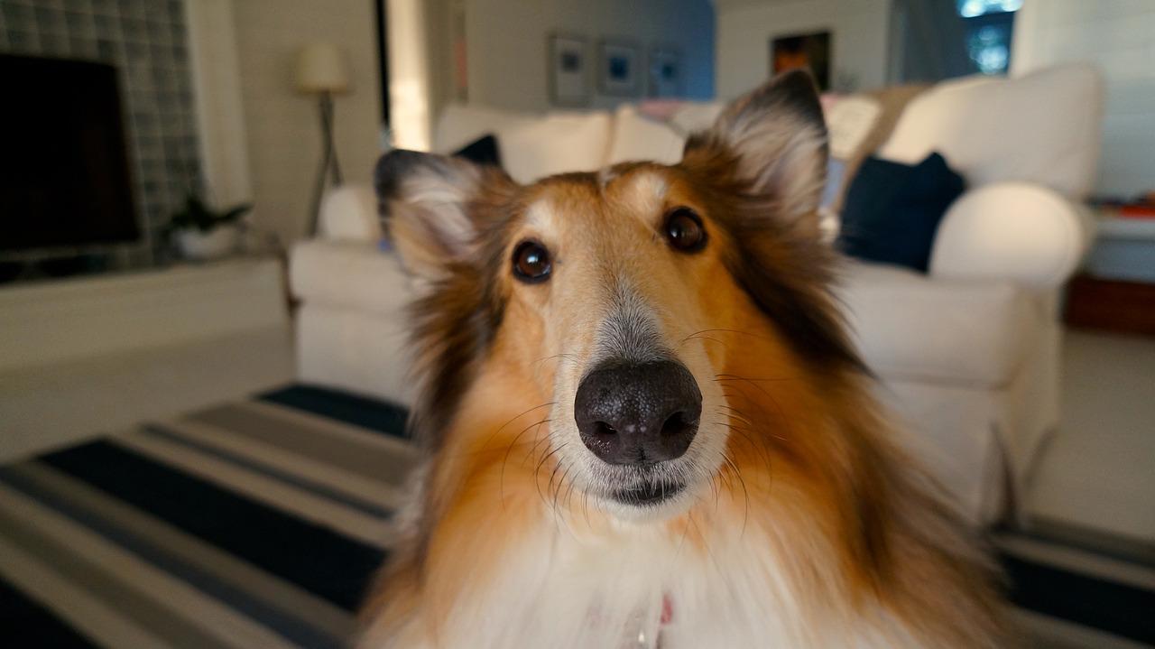 dog-705820_1280.jpg