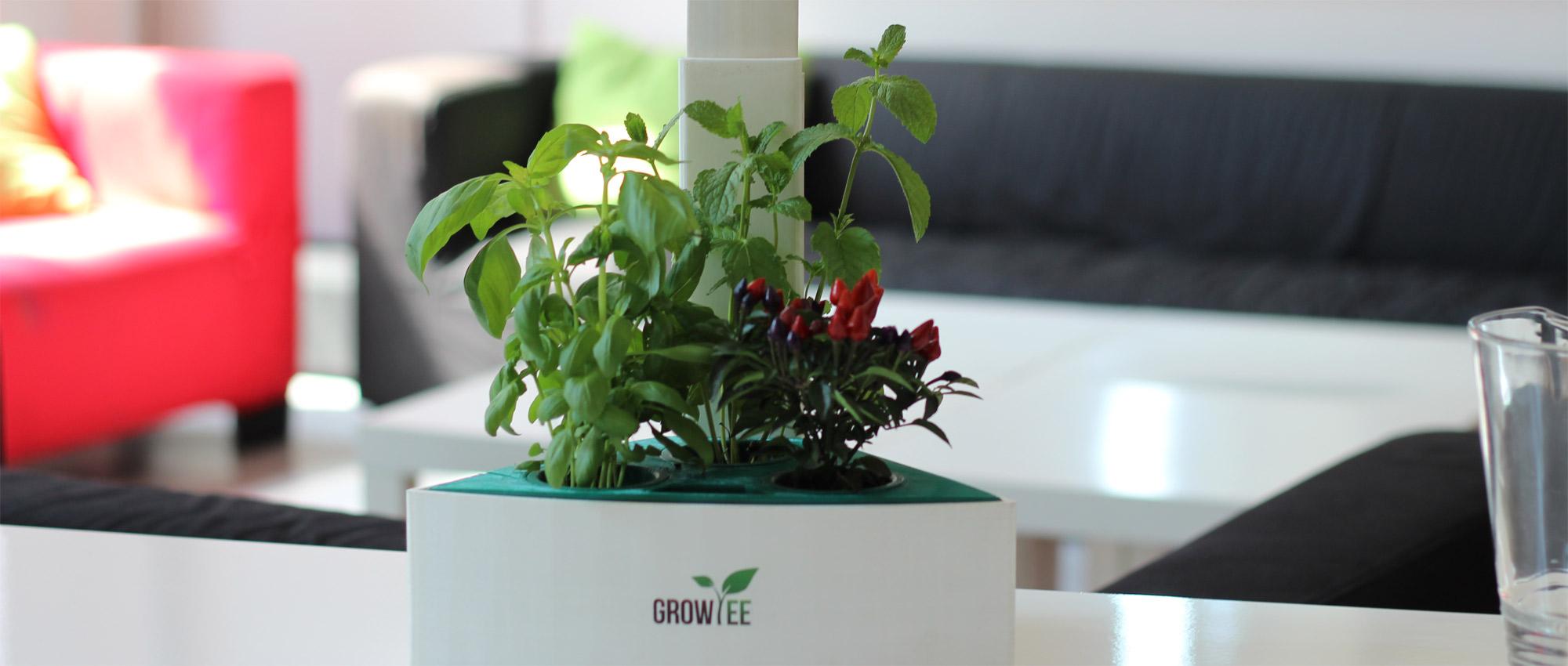 growiee1.jpg