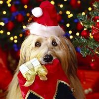 15 vicces tipp, hogyan óvd meg a karácsonyfát a háziállatoktól