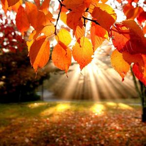 5 dolog, amit idén ősszel ki kell próbálnod