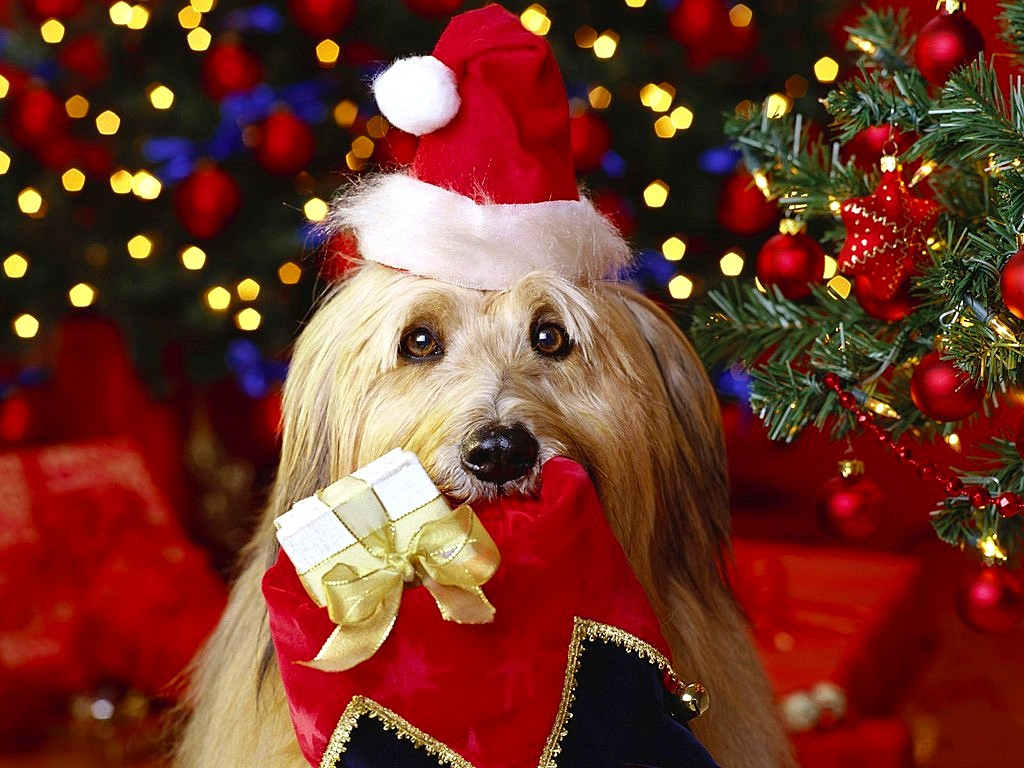 12_24_14-cutest-christmas-dogs10.jpg