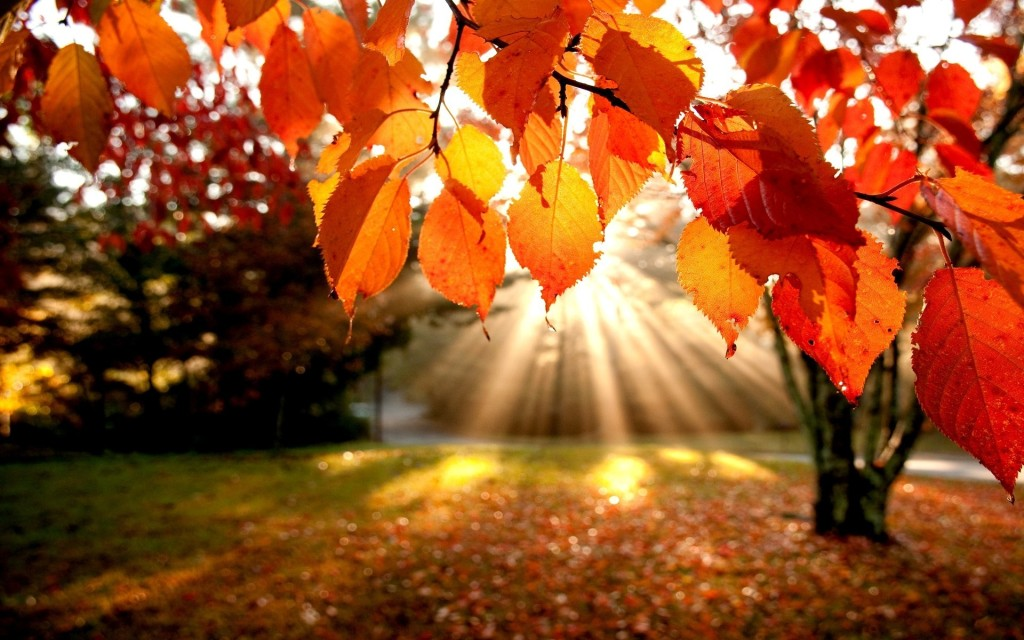 autumn-leaves-1024x640.jpg