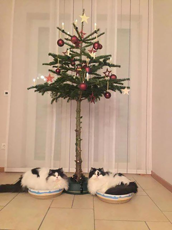 protecting-christmas-tree-from-dogs-cats-pets-19-585a7629ec52f_605.jpg