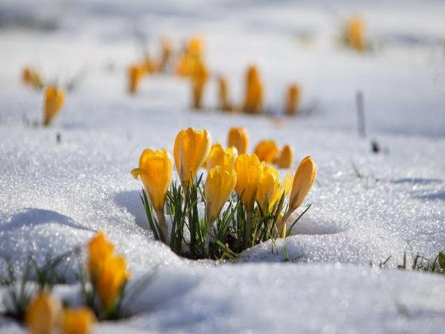 Az élénk tavasz típusú hölgy