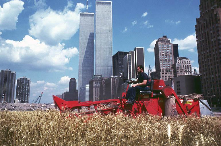 wheatfield-xl.jpeg